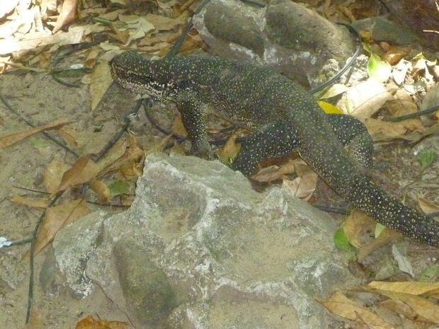 A monitor lizard who just wants to be left in peace. I can dig that.