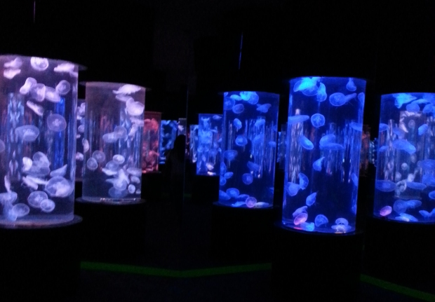Jellyfish tanks