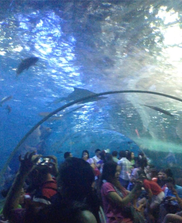 The underwater plexiglass corridor of the Oceanarium